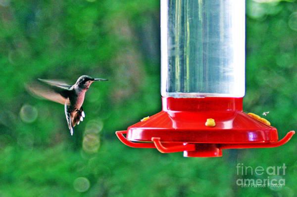 Wall Art - Photograph - Hummingbird Love by Jinx Farmer