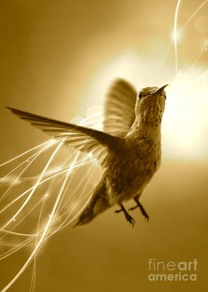Photograph - Hummingbird Magic - Sepia by Carol Groenen