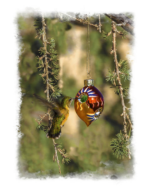 Photograph - Hummingbird Ornament by Lou  Novick