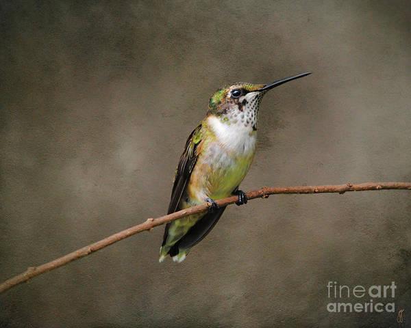 Photograph - Hummingbird Portrait I by Jai Johnson