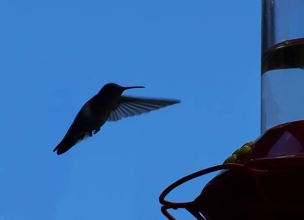 Digital Art - Hummingbird Silhouette  by Chris Flees