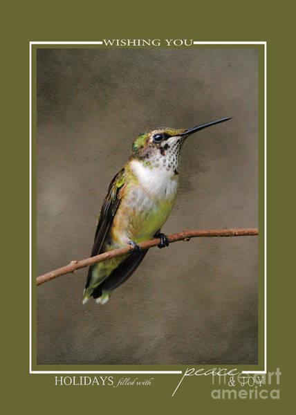 Photograph - Hummingbird Song Bird Wildlife Christmas Cards by Jai Johnson