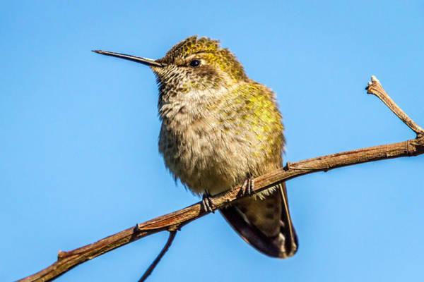 Photograph - Hummingbird Standing Still by Pierre Leclerc Photography