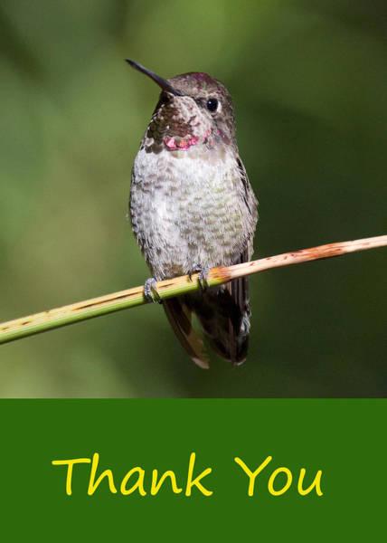 Photograph - Hummingbird Thank You by Chris Scroggins