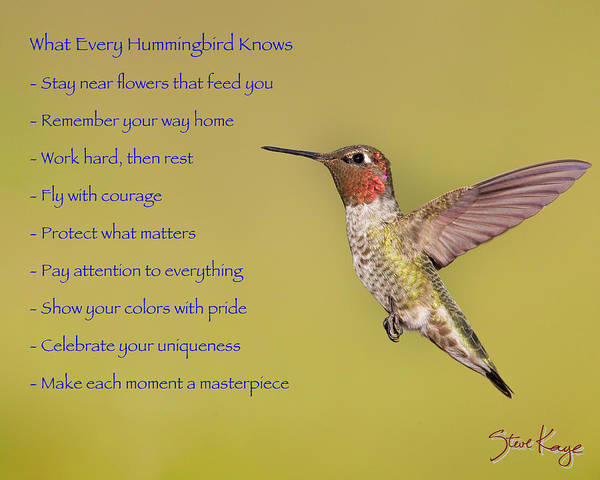 Photograph - Hummingbird Wisdom by Steve Kaye