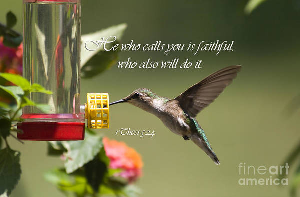 Photograph - Hummingbird With Scripture by Jill Lang