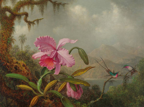 Humming Bird Wall Art - Painting - Hummingbirds And Orchids by Martin Johnson Heade