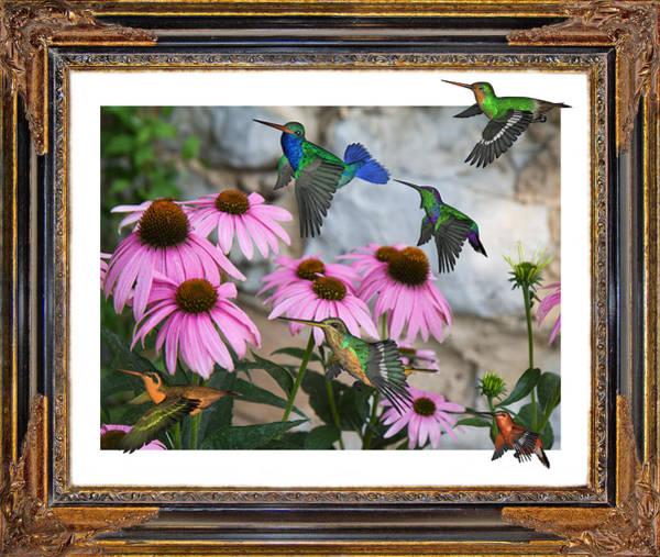 Wall Art - Digital Art - Hummingbirds by Betsy Knapp