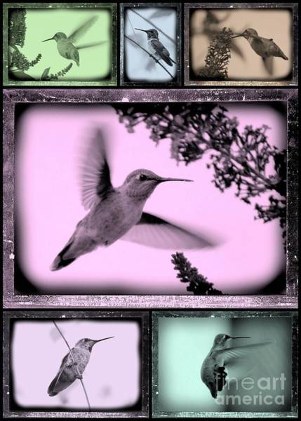 Photograph - Hummingbirds In Old Frames Collage by Carol Groenen