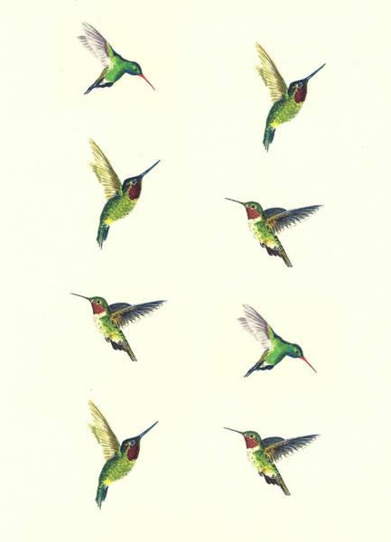 Wall Art - Painting - Hummingbirds by Michael Vigliotti
