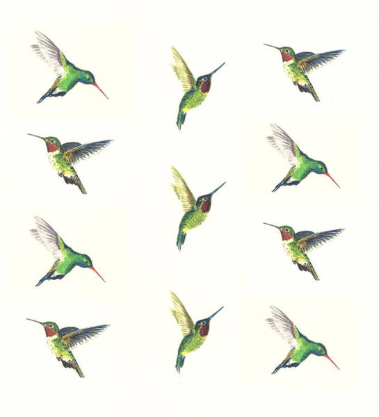 Bird Watercolor Painting - Hummingbirds Number 2 by Michael Vigliotti