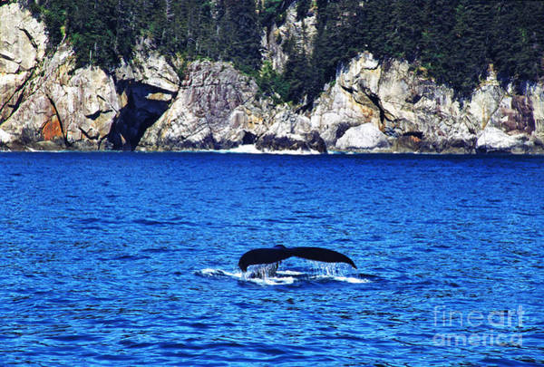 Photograph - Humpback Whale Alaska by Thomas R Fletcher