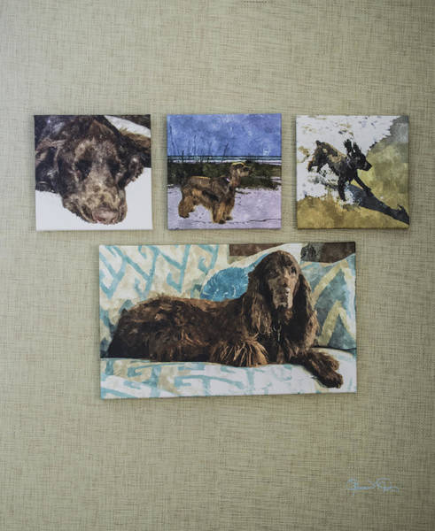 Photograph - Shown Hung On Wall - Grouping From Dogs Gallery by Susan Molnar