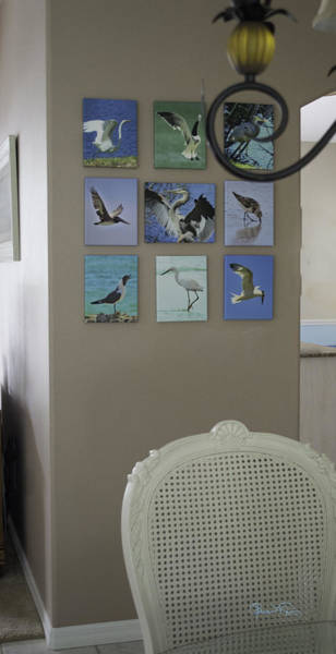 Photograph - Shown Hung On Wall - Various Bird Prints by Susan Molnar