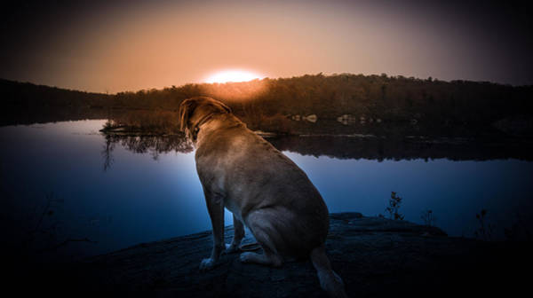 Photograph - Hunger Games - Doggie Style by Jim DeLillo
