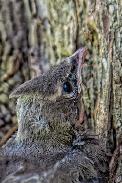 Wall Art - Photograph - Hungry Baby by Keith Hutchings