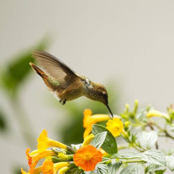 Photograph - Hungry Flowerbird by Heiko Koehrer-Wagner