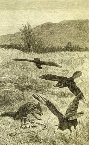 Wall Art - Drawing - Hunt Fox Austria 1891 by Austrian School
