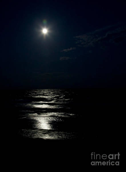 Photograph - Hunter's Moon II by Michelle Constantine