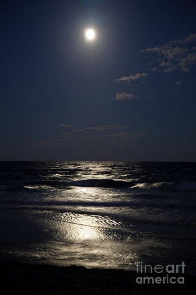Photograph - Hunter's Moon Iv by Michelle Constantine