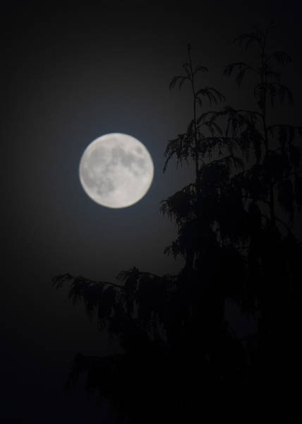 Photograph - Hunters Moon by Randy Hall