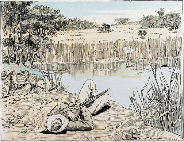 African Animal Drawing - Hunting A Hippopotamus In South Africa by South African School