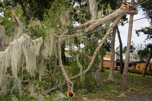 Wall Art - Photograph - Hurricane Irma Damage, Tree In Power by Millard H. Sharp