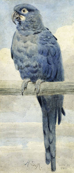 Wall Art - Painting - Hyacinthine Macaw by Henry Stacey Marks