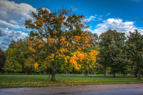 Photograph - Hyde Park In Autumn by Ross Henton