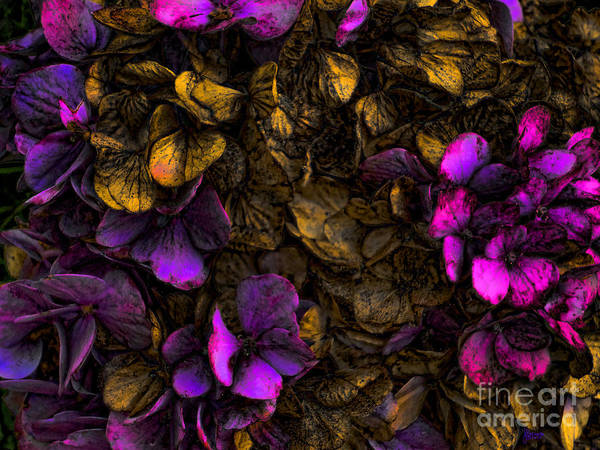 Photograph - Deep Hydrangea  by Jeff Breiman
