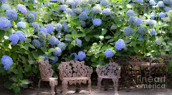 Woodside Photograph - Hydrangea Garden by Amy Fearn