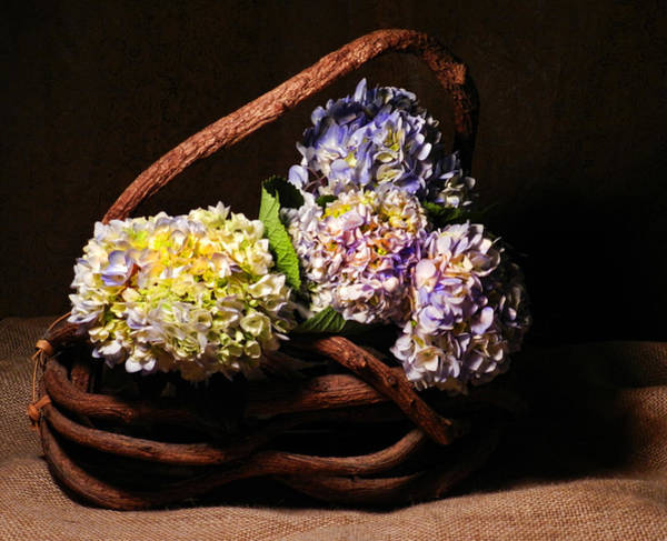 Photograph - Hydrangea In Twig Basket by Grace Dillon
