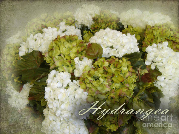 Photograph - Hydrangea by Lee Owenby