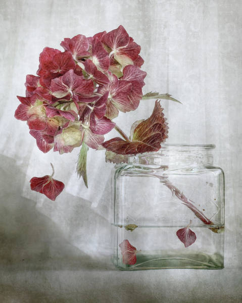 Filter Photograph - Hydrangea by Mandy Disher