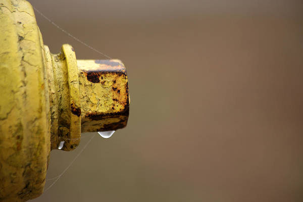 Water Hydrant Photograph - Hydrant Drip by Karol Livote
