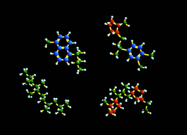 Wall Art - Photograph - Hydrocarbon Molecules In Diesel Fuel by Dassault Systemes Biovia Ltd/science Photo Library