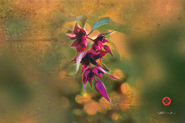 Photograph - Hymalayan Honeysuckle by David Davies