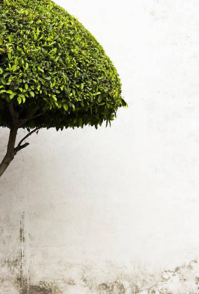Hypnotic Tree Art Print