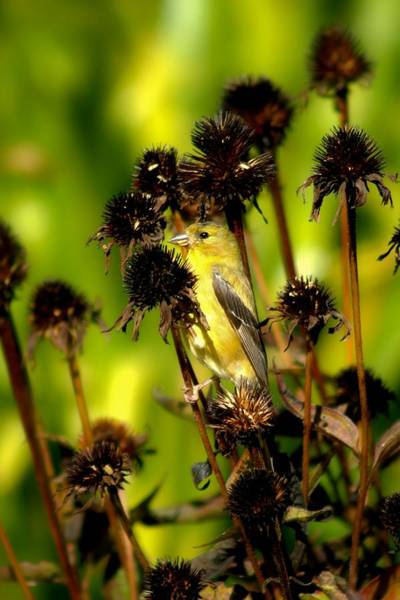 Photograph - I Am A Flower Stalk Do You See Me by Carol Montoya