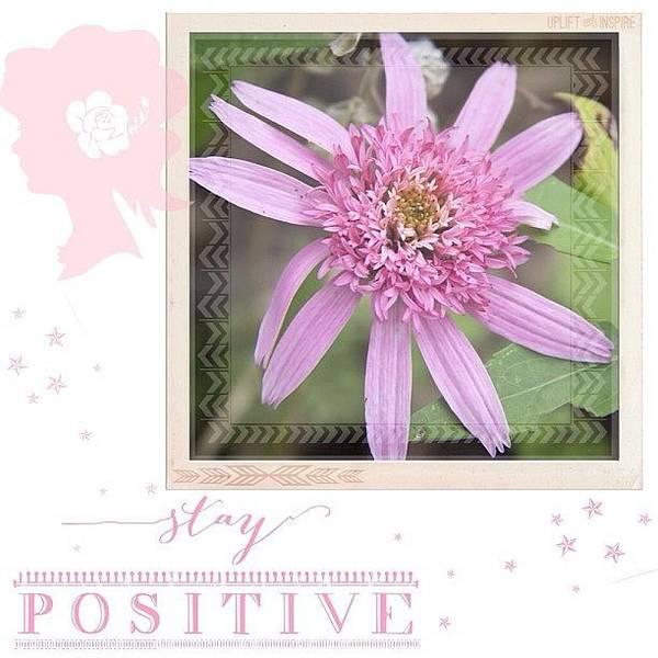 Pink Wall Art - Photograph - I Am #positive The #rain Will End Soon by Teresa Mucha