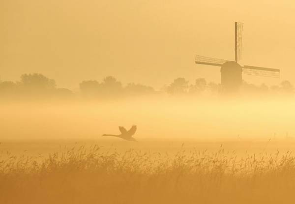 Windmills Photograph - _i_ by Annemieke