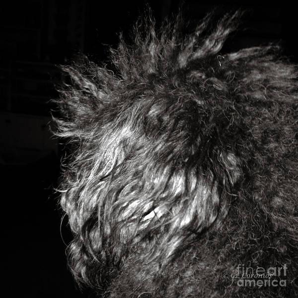 Photograph - My Hair Is A Mess by Carol Lynn Coronios