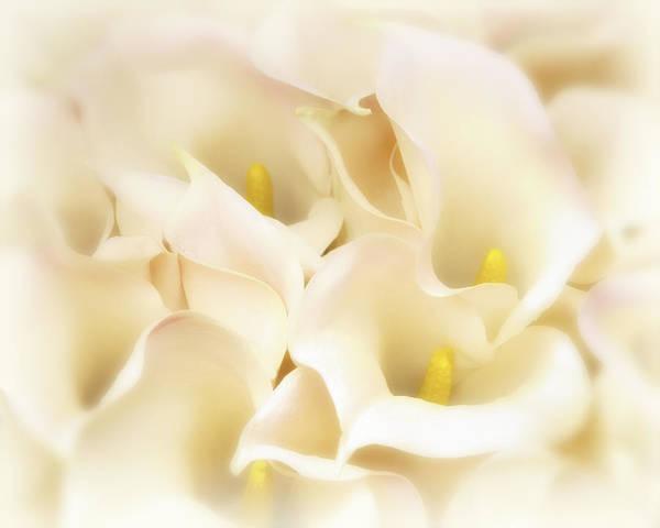 I Dreamed Of Calla Lilies Art Print