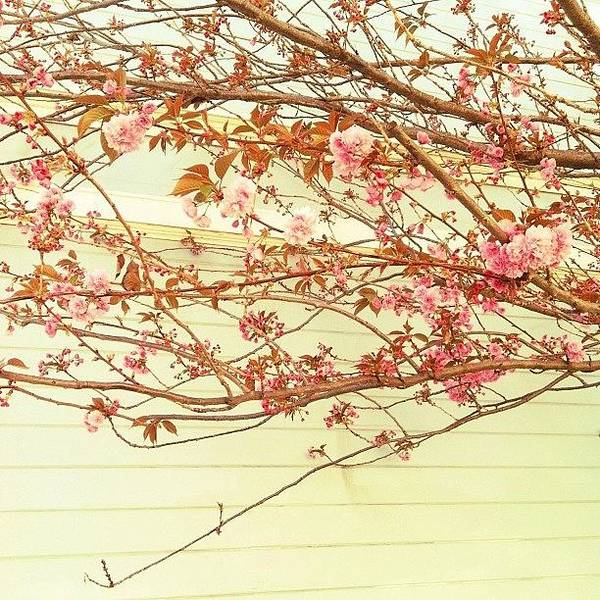 Blossom Photograph - I Feel Pretty by Courtney Haile
