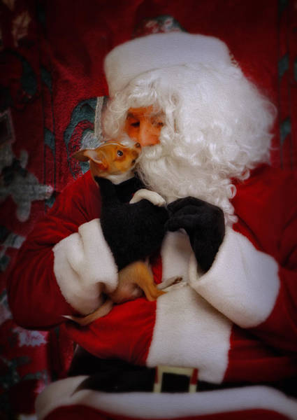 Photograph - I Have Been A Good Pooch Santa by Susan Candelario