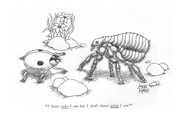 Lady Bug Drawing - I Know Who I Am But I Don't Know What L Am! by Joseph Farris