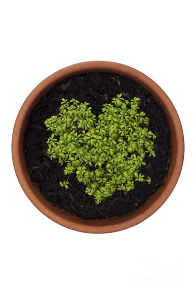 Clay Pot Photograph - I Love Cress by Anne Gilbert