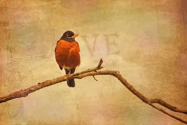 Photograph - I Love Robins by Peggy Collins