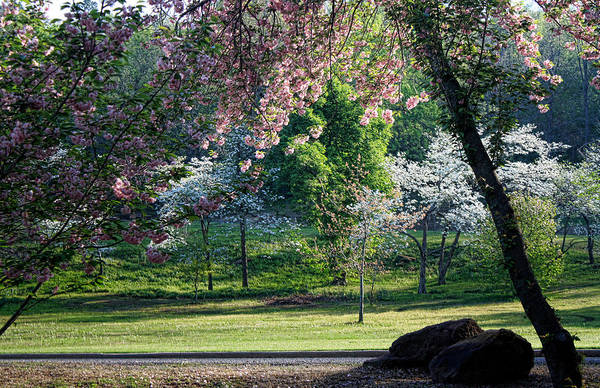 Honor Heights Park Photograph - I Love Spring by Carolyn Fletcher