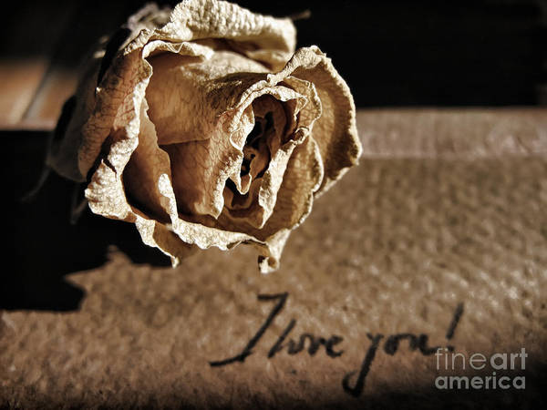 Photograph - I Love You Letter by Daliana Pacuraru